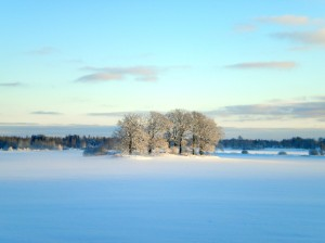 solbelyst åkerholme i snö