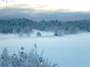 snötäckt åker i dimma